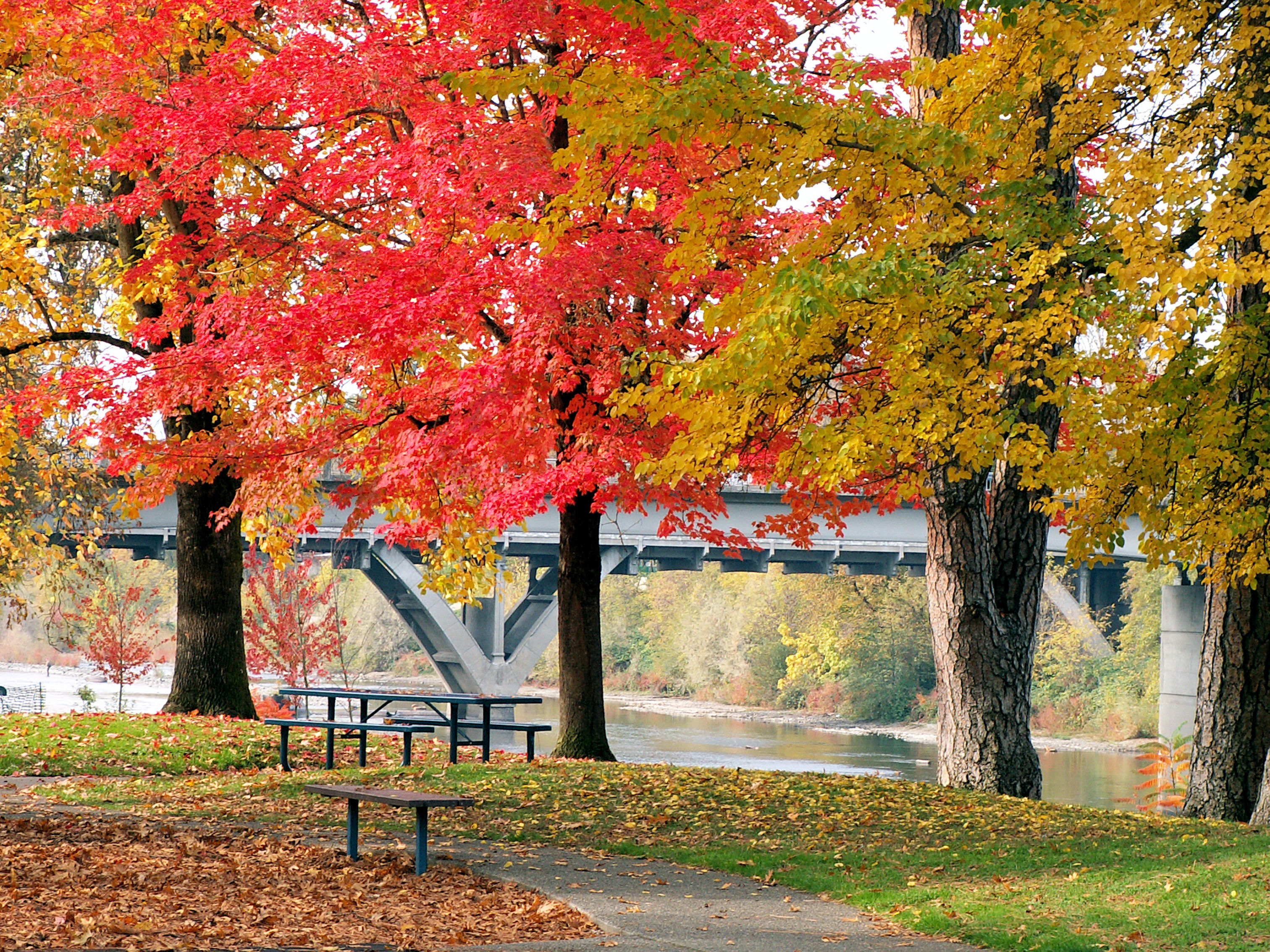 Fall at Riverside Park with the Caveman Bridge