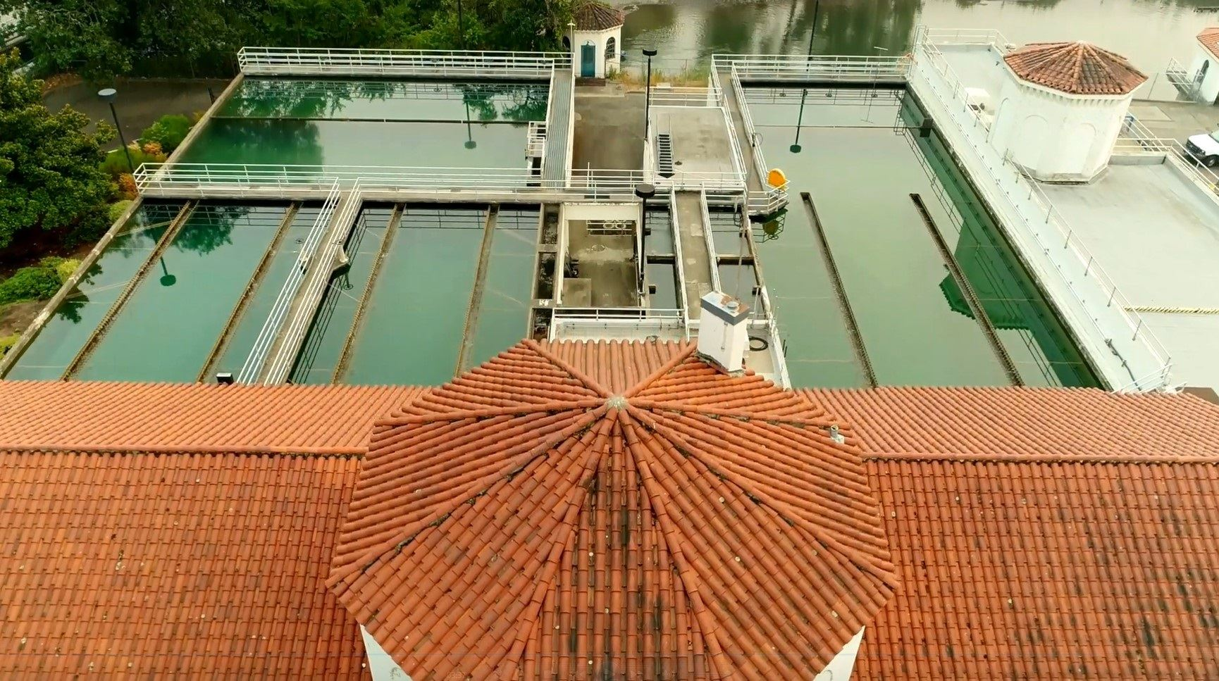 Water Plant picture overhead