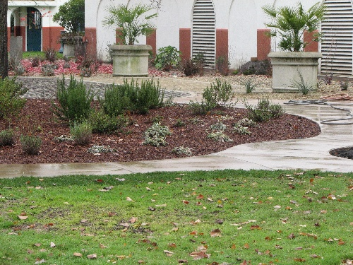Example of Xeriscaping at the Water Filtration Plant